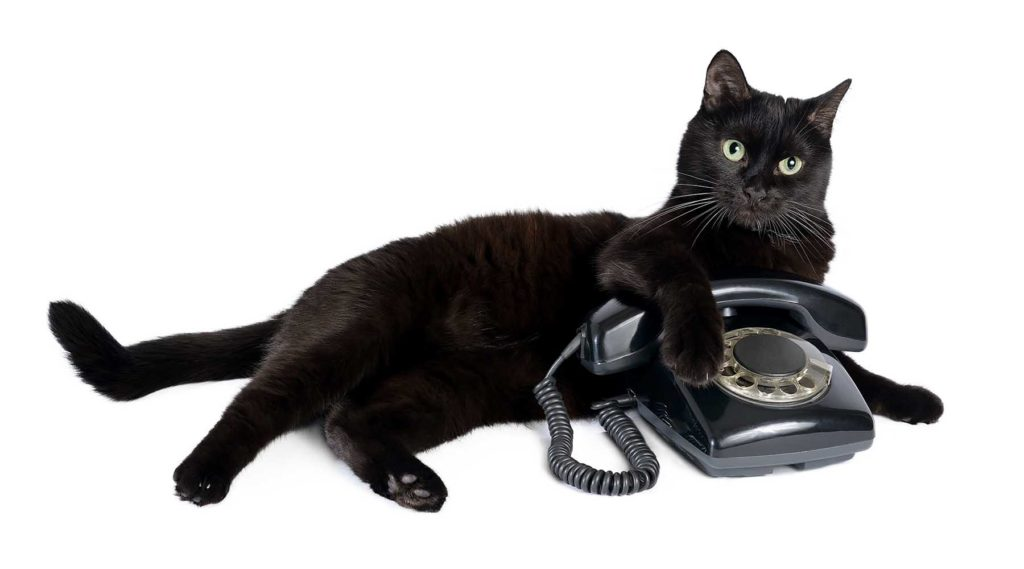 black cat laying next to a phone