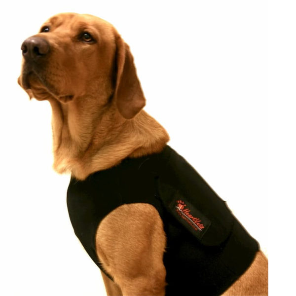 dog wearing holter vest
