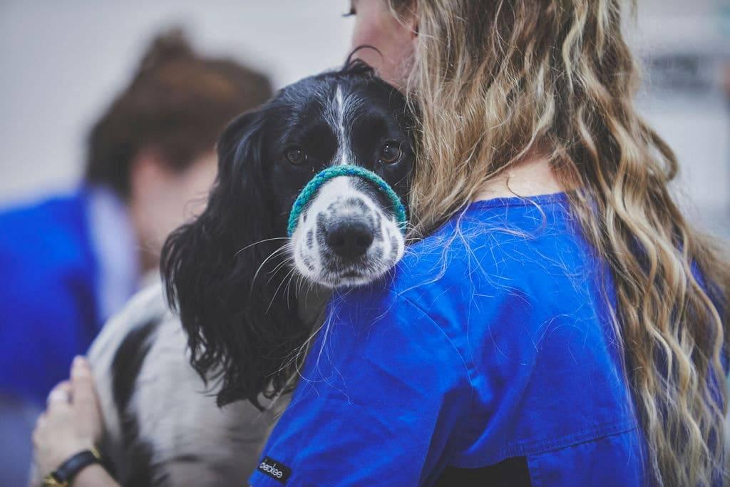 vet holding a dog
