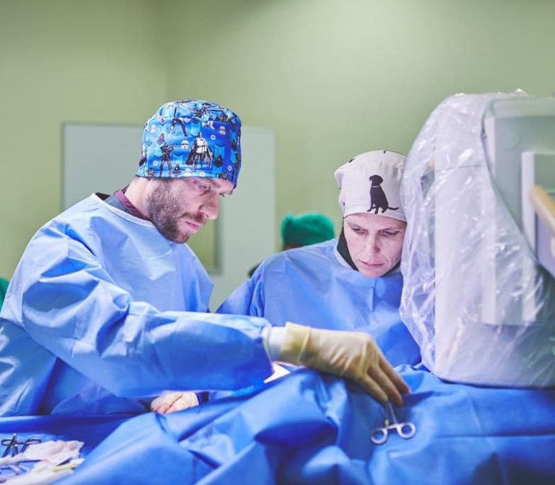 Heart vets working at surgery